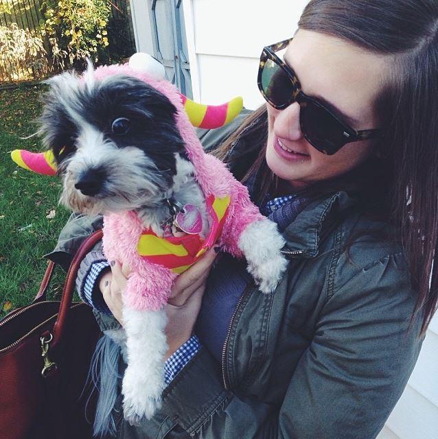 tilly reid havachon puppy reidmore