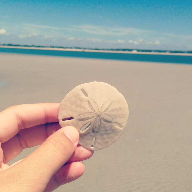sand dollar island obx vacation