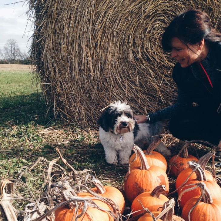 tilly with pumpkins