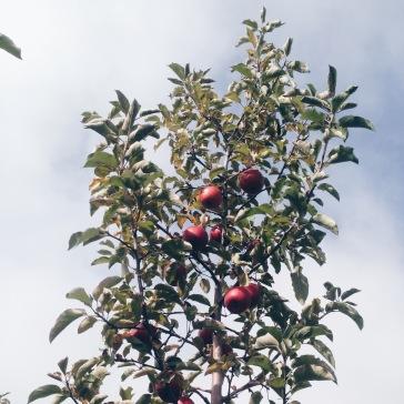 apple farm milwaukee wi