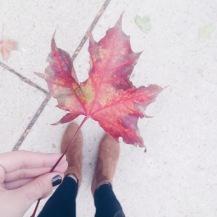 fall foliage cedarburg wi